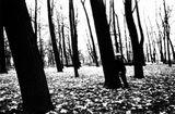 Неожиданная встреча осенью в Летнем саду тогда ещё Ленинграда. Мне она очень запомнилась...