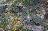 Ящероголовы- хищники. Питаются мелкими беспозвоночными  и рыбками, немного уступающими им по величине: http://www.lensart.ru/picture-pid-720ba.htm http://www.lensart.ru/picture-pid-74844.htm Иногда может включить в рацион питания и своих собратьев.  Ящероголов, Красное море