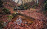 Адыгея, верховья ручья Фарс, ноябрь.