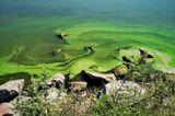 Цветущий Днепр на глади Кременчугского водохранилища
