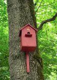 Angry Bird!!!