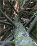 Просто старое поваленное дерево...