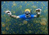 Палау.Много тысяч лет назад маленькое озеро с морской водой оказалось отрезанным от океана в результате геологических процессов. В этом озере в это время находились медузы. В течение тысячелетий они размножились и, будучи в полной безопасности в отсутствии хищников, потеряли свои защитные свойства - их можно трогать без риска быть укушенным.