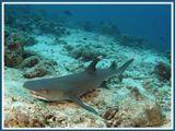 Снимок сделан в Индийском океане возле Мальдив.