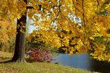 Петербург. Елагин остров. Северный пруд. Октябрь