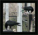 Крупные черные птицы чуть ли не визитная карточка любого кладбища... Их присутствие или УЧАСТИЕ может каждый понять и принять по-своему... Фото поместил в раздел жанр. Можно было в раздел город, но это походило бы скорее на репортаж из города мертвых...