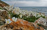 Байкал Анга ветренница ветер