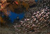 Красное море Хургада Шабрур