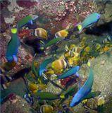 """Рыба устроила настоющую """"круговерть"""", склевывая что-то с камней.О.Верде, Филиппины"""