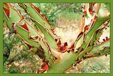 Никитский ботанический сад.вдали от экскурсионных троп.Пленка fuji superia 200. Practica MTL 5 (хороший был фотик)июль 2005.
