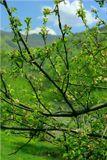 Карпаты, май 2004 г.  Поздравляю всех ЛенсАртовцев с первым днем весны!