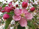 весны хочется !!!!