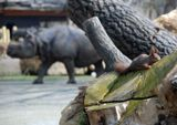 в Венском зоопарке