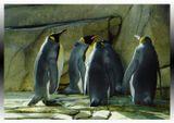 Берлинский зоопарк, съемка через стекло.