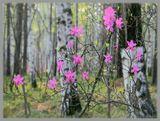 Я в весеннем лесу пил березовый сок... (С.Есенин)