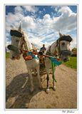 ...или о том как PIVZ катал хохлов по Пирогово на угнанных лошадях...