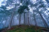 Крым туман дерево
