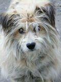 Люблю собак, у самой породистый и титулованный пёс, но...Что-то всё-таки есть в этих маленьких лохматых дворовых..!