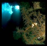 В Красном море