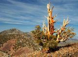 Местечко это называетса Big Pine в этой горной местности очень древние старые деревья (как написано в книге им более 5000 лет)... Среди этих деревьв чувствуеш Огромную Энергетику....