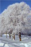 Новгородская обл., с. Витославицы, январь 2004 г.Поздравляю с началом лета, коллеги! :)