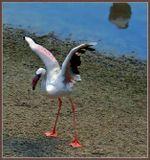 Жара,  молодые фламинго.