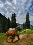 Соль, насыпанная на камень, - одно из самых любимых лакомств лошадей. Снято на горной заимке в ущелье Медео.