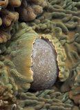 филиппины. твердые кораллы
