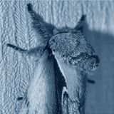 Портрет ночной бабочки. :)