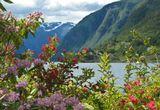 Норвегия бывает и такая ...