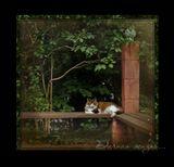 Кот Филипп передает  коту Василию,  коту Касяку, коту Винчестеру и всем котам, живущим дачной жизнью - большой ПРИВЕТ! :)