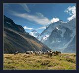 Сентябрь. L'Arpitetta (2200м). Пришли к небольшому озеру на горе, а рядом оказалось это стадо овец, пасущихся на горных просторах.