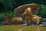 Север Тайланда. Национальный паркСониАльфа100+70-200/2,8+телеконвертер 2х