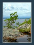 Снимок сделан на острове Кандалакшского залива Белого моря в августе 2007 г.