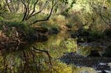 Старица - старое русло реки, которое из-за петлистости русла оставлено водостоком реки, как правило, зарастает и заболачивается, в половодье соединяется с рекой протоками и рукавами