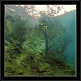 Fresh water - 2007./Underwater Photographer - Andrey Nekrasov/