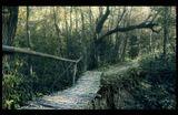 мостик лес тропика