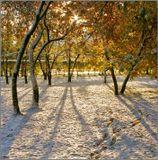А наутро выпал снег...03 октября 2007, 08:30