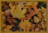 """""""На ковре из жёлтых листьев""""..."""