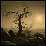 От палящего солнца, от ветра,От невзгод заслоняю, любя...Вырастай поскорей, моя смена:Я ветвями прикрою тебя!------------------------------------Зимний вечер в горах Бурятии.