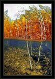 Подводная осень, в затопленном лесу