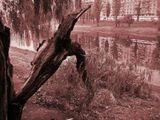 открытая рана у дерева...возможно смертельная