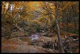 Снова листьями осень метет,Дни плывут, как по речке коряги...