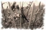 После сенокоса на полях Башкирии