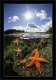 "White sea - 2007/Underwater Photographer - Andrey Nekrasov/2-ой приз зрительских симпатий - Золотой дельфин -2008 / Россия.WINNER - Open Category / Великобритания - 2008Гран-при - 2008 / Украина, ""Водный мир""2-st. / Испания - 2008Спец.приз / Турция - 2008WINNER - in 4 th DAN PHOTOCONTEST SESSION / Denmark - 2008Nominees, for: ""Images of the World - the best color print""- 2008 / ИзраильBest photo of the Year 2008 - DAN EUROPE"